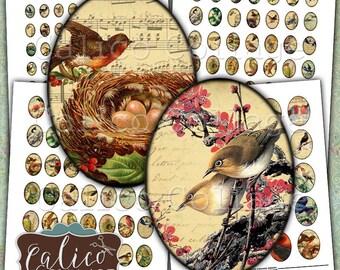 Vintage Birds, Digital Collage, Collage Sheets, Printable Cabochon, 30x40mm, 22x30mm, 18x25mm, 13x18mm, Printable, Oval Images