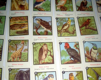 Vintage (1940s) Animal Falilies Card Game by Piatnik