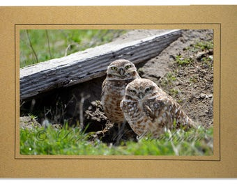 Handmade Owl Cards - Burrowing Owl Cards - Pair of Burrowing Owls Photo - Cards of Burrowing Owls - Handmade Burrowing Owl Card