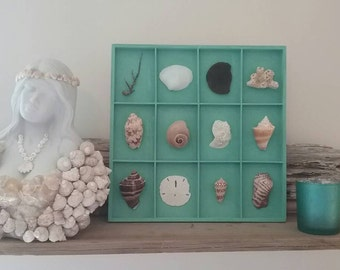 Beachy seashell art wall hanging home decor mounted shells mermaid cottage style Coastal turquoise teal white brown wood collage specimen