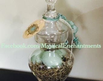 Spring/Easter Glass Apothecary jar with moss and Robins eggs