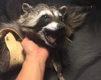 Raccoon Headdress Native American Made Warbonnet Mountain Man pow wow