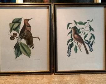 Pair Framed Bird Print