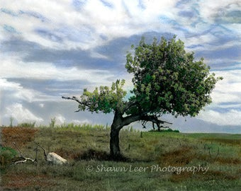 Hand Painted Photograph South Dakota Prairie Tree