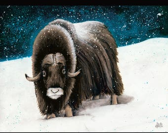 PRINT or GICLEE Reproduction -- Musk Ox Illustration From My Children's Book -- 12 x 16 -- Only 100 Signed Available  -