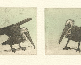 Brown Pelican Diptych, original aquatint etching, in brown and aqua