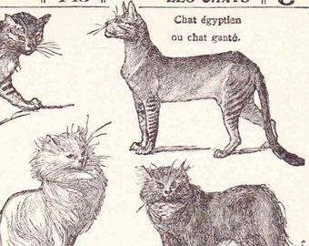 Beautiful Antique French Print 1920s Engraved Illustrated Book Page Les chats French cats
