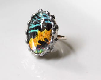 Real Moth Sterling Silver Ring, Madagascan Sunset Moth, Colorful Oval Ring