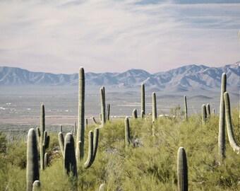 Desert Photography Print Fine Art Arizona Saguaro Cactus Rustic Mountains Field Southwest Winter Landscape Photography Print.