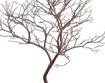 "Reserved for Rollerme * Manzanita Branches 2-pack  28"" Tall, Premium Centerpieces,  Weddings, Floral, Crafts"