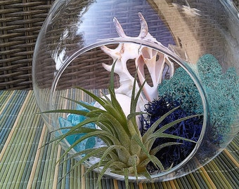 Beach terrarium - DIY terrarium - Air plant terrarium - gift - Hanging glass terrarium - Blue - Air planter - Cottage terrarium