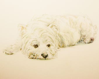 Westie painting - print from original watercolour