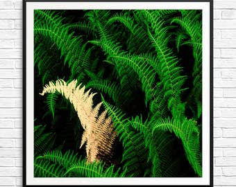 fern wall print, fern print, fern art print, fern wall hanging, fern botanical print, forest art pictures, large green art, serene art print