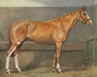 Chestnut and Chrome - Vintage 1940s Artist-signed Horse Postcard