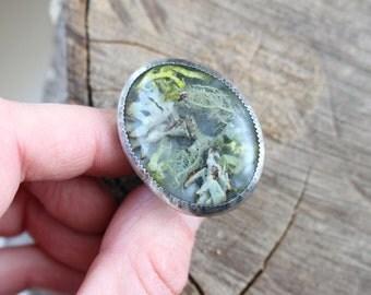 Lichen Focus Ring