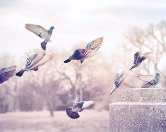Bird photograph, Pigeons, Birds in flight