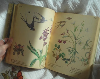 The Country Diary of An Edwardian Lady by Edith Holden, Vintage Book, Illustrated Natural Book, Classic Flora and Fauna Book, Collector Book