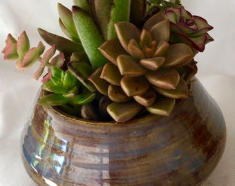 Succulents planted in handmade ceramic pot For Father's Day,  Handmade ceramic pot