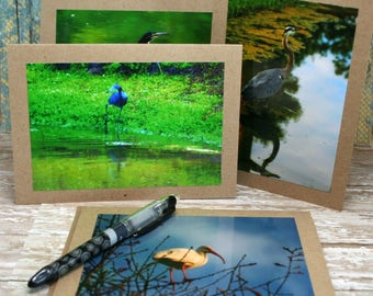 Blank Note Cards Featuring Original Photography of Birds from the SC Low-Country on 5x7 Brown Kraft Card Stock Set of 4