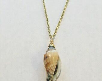 Dainty seashell necklace