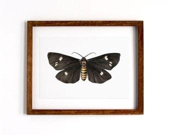 Magpie Moth – Giclee Art print
