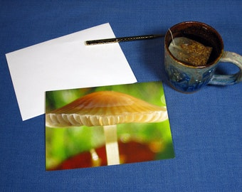 Mushroom Greeting Card, note card, blank cards, nature cards, mushrooms, photography cards, The Poetry of Nature, art cards