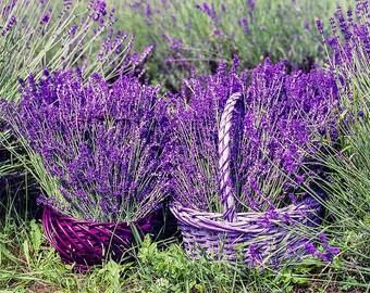 Vanilla Lavender/Natural Soy Wax Melts