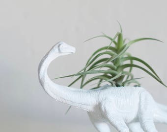 Air Plant Holder - Large White Brontosaurus Dino Planter With Air Plant - Dinosaur Planter - Air Plant Tillandsia - Office Planter - Decor
