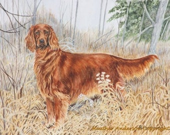 "8x10 Giclee Print, Irish Setter , ""Caleb"", hand drawn, dog art, Heather Anderson"