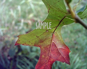Autumn Oak Leaf ACEO Photo Art Print Card or Bookmarker by Tree Pruitt