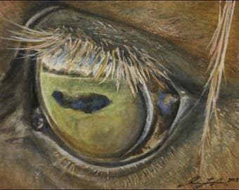 Detailed Horse Eye Art - High Quality Prints from original detailed horse painting - fast postage