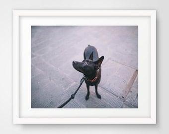 Printable Art, Instant Digital Download, Wall Decor, Wall Art, Photography, Animal Photography, Dog Photography, Nature