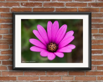 Pink Flower Photography Print Printable Art Downloadable Print