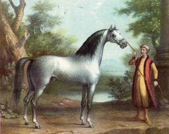 Sporting Pictures of England Guy Pager 1835 Bookplate Grey Arab Stallion