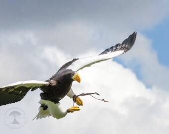 wildlife photography, eagle, bird photography, animal photography, bird of prey, wildlife art, bird eagle photo, raptor, nature, wall prints