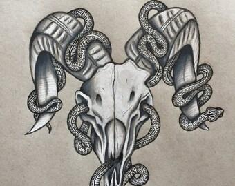 Skull - Art Print