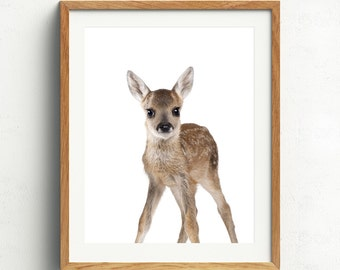 Deer Print, Wild Animal Art, Nursery Animals, Woodland Nursery, Deer Photo, Baby Deer