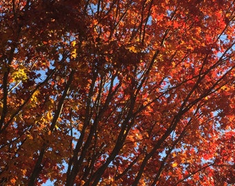 Fall Colors Photography or Fall Colors Digital Print