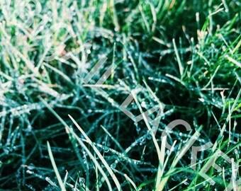 Nature Print, Photography Print, Nature Art, Dew Drops on Grass, Wall Art, Wall Decor, Vertical Art Print, 4 x 6 Print