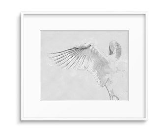 Black and White Art, Printable Art, Bird Art, Wildlife Prints, Wings Art, Printable Wall Decor - Swan Art Print