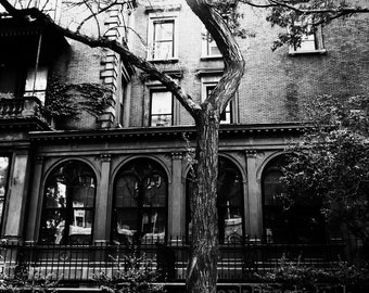 Twisted tree; New York City; Black and white urban nature photography; wall art; bedroom; bathroom
