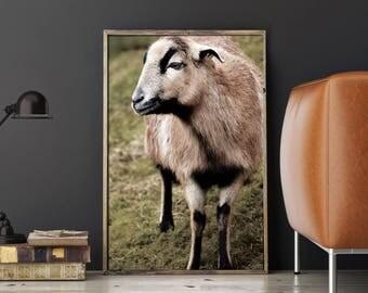 Sheep Photo Print, Sheep Home Decor, Sheep Photography, Sheep Photo Print, Sheep Printable, Sheep Card, Rural Photography, Sheep Art Print