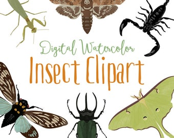 Insects Watercolor Clipart, summer clipart, woodland clipart, butterfly, moths, bugs, beetle, cicada, commercial use, scrapbook, png