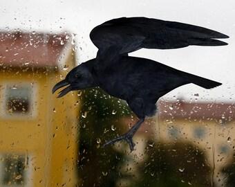 Bird wall decal Gothic home decor Crow Raven Bird decals Window decal  for living roon Vinyl Door sticker  Black bird Halloween decor
