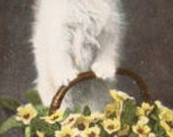 """Vintage Cat Postcard """" I Feel Cleaver"""""""