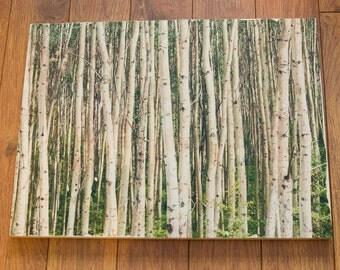 Birch Tree Wood Canvas