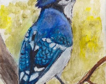 Arrogant Blue Jay