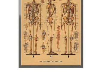 Skeletal System Framed Art