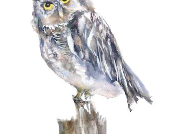 northern screech owl archival print,  screech owl art,  owl watercolor, original designs, owl painting,  birders gift, owl gift,