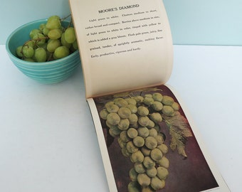 Continental Nurseries Descriptive Plate Book, Process Color Photographs of Fruit, Vegetables, Plants, Shrubs, Gardens, Trees & Much More